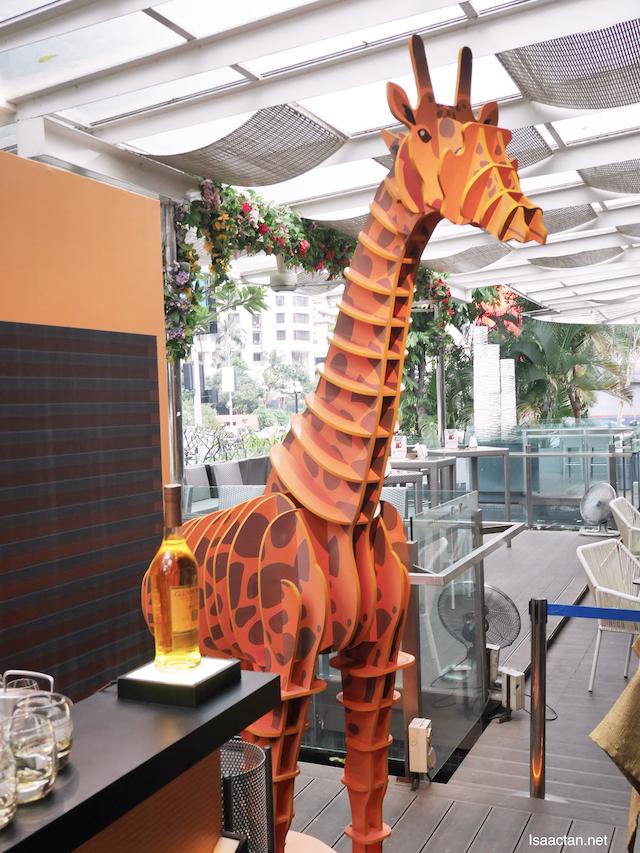 Now here's an interesting giraffe