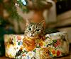 크리스마스 캐롤 노래 모음