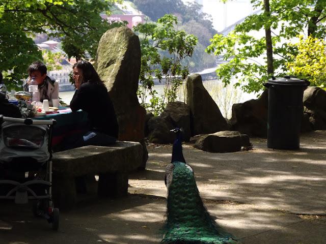 família fazendo piquenique em jardim  e pavão ao lado