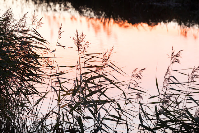 Sunset colour is reflected in the river at the RSPB nature reserve of Ouse Washes