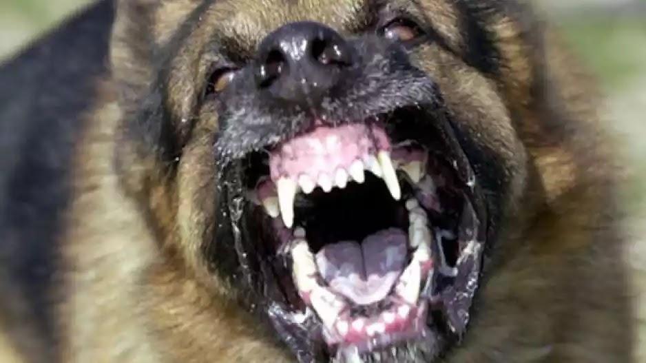 Κορινθία: Άγρια επίθεση από δυο σκυλιά σε κοριτσάκι - μουγκά  οι υποκριτές σε «φιλοζωικές οργανώσεις »