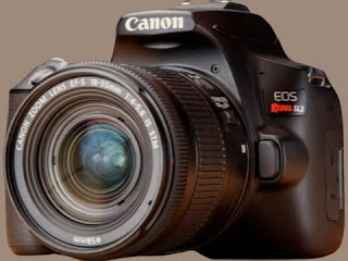 Best DSLR in the 2019: Top DSLRs for Beginners Enthusiasts and Pros