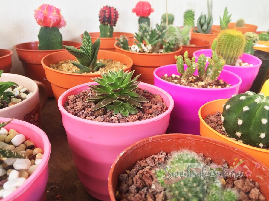 Cactus & Succulents @cahtuschibo
