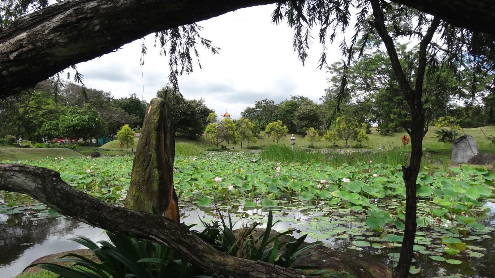 The Bayou Botanist Singapore Chinese And Japanese Gardens
