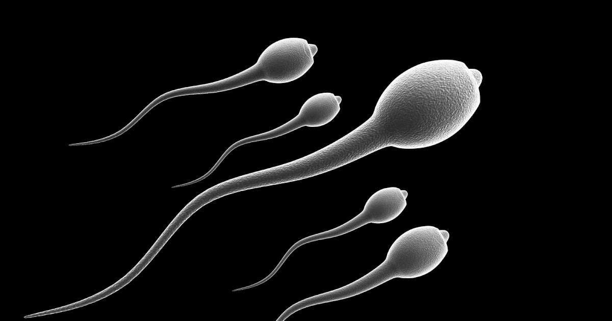Male sperm health
