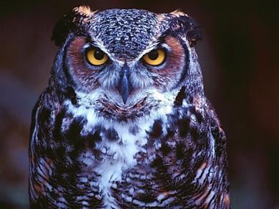 Unduh 61+ Foto Gambar Burung Hantu Cantik  Terbaru Gratis