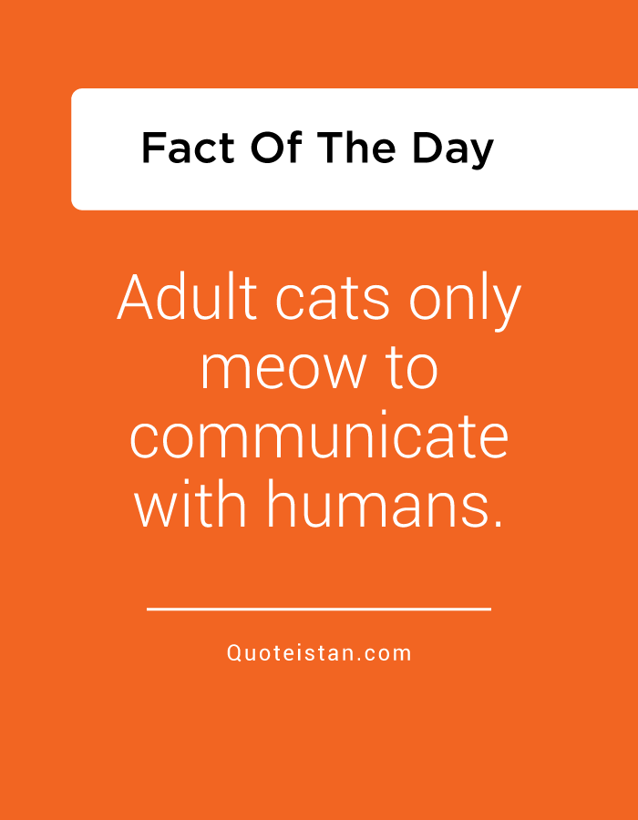 Adult cats only meow to communicate with humans.