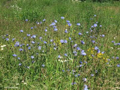 Swedish meadow