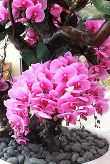 Bunga Anggrek Bulan Pink
