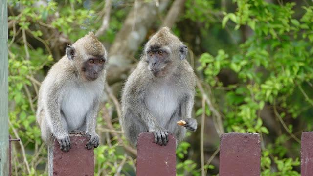 Explore nature conservation In Mauritius
