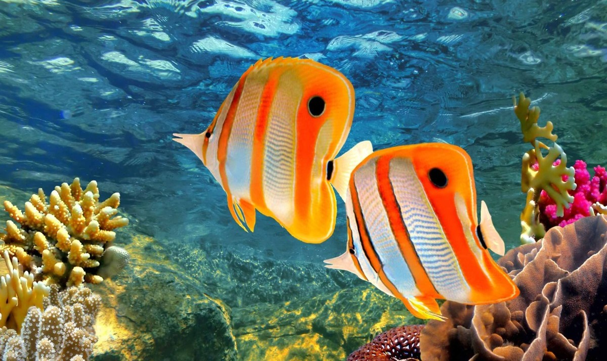 Diving in the Great Barrier Reef of Cairns in Australia