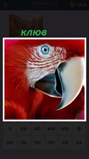 655 слов клюв крупным планом красного попугая 12 уровень