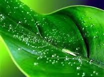 Tratamientos Naturales Y Remedios Que Curan La Psoriasis