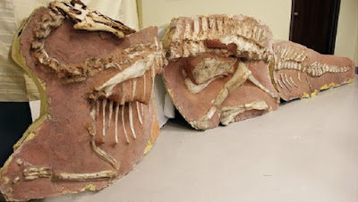 US hands over looted dinosaur fossils to Mongolia