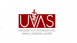 www.uvas.edu.pk Jobs 2021 - University of Veterinary & Animal Sciences (UVAS) Jobs 2021 in Pakistan