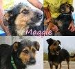 Maggie: Para adopção