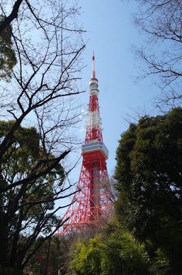 Tokyo Tower and sakura trees Japan