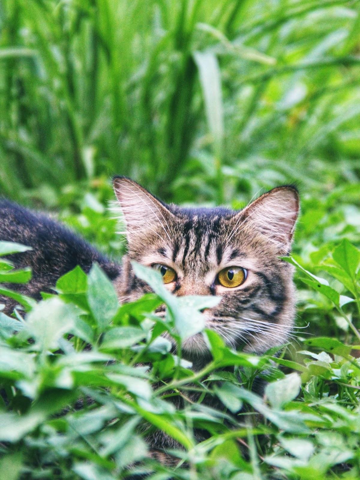 20 Koleksi Gambar Kucing Comel Bernama Tambi 1