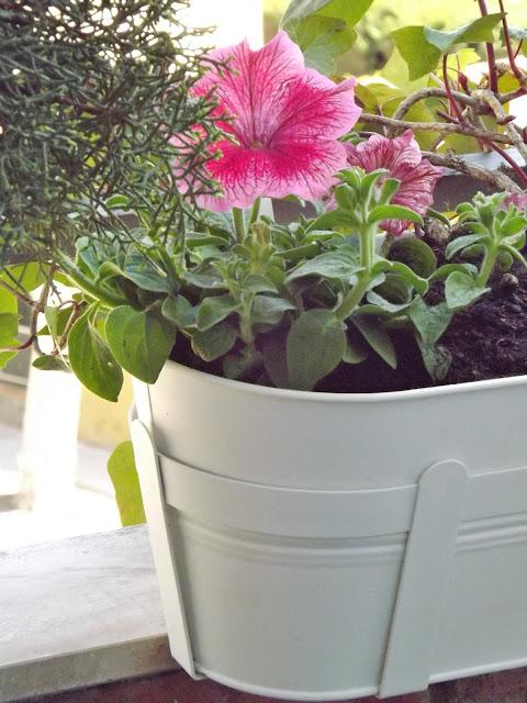 he de deciros que las jardineras estaban expuestas en diferentes colores blancas como las escogidas por mi pero tambin en lilas y verde mint