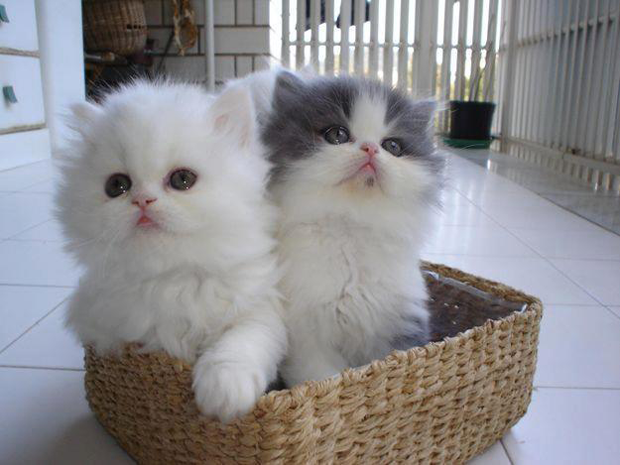 cute cats and kittens   pictures part 2