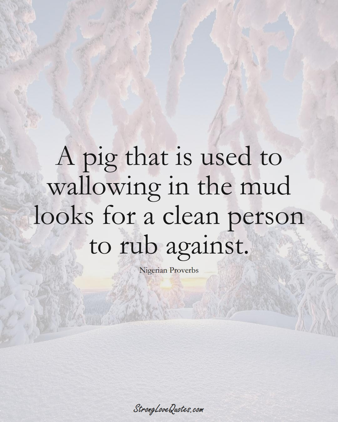 A pig that is used to wallowing in the mud looks for a clean person to rub against. (Nigerian Sayings);  #AfricanSayings