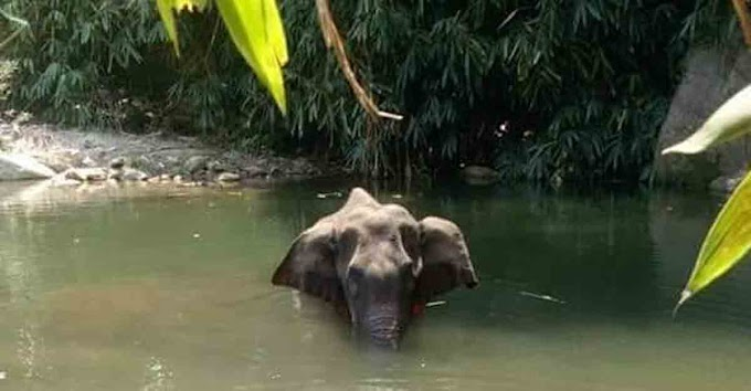 Hindi Shayari on Animal cruelty - Elephant died in Kerala 2020