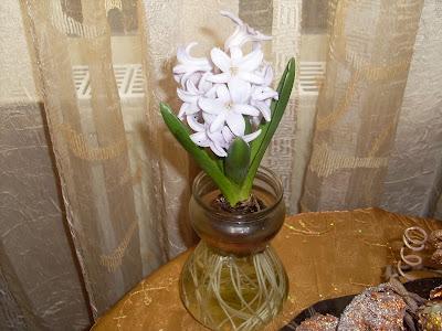 Λουλούδια με το χρώμα της αρχοντιας και της αριστοκρατίας ,το άσπρο.