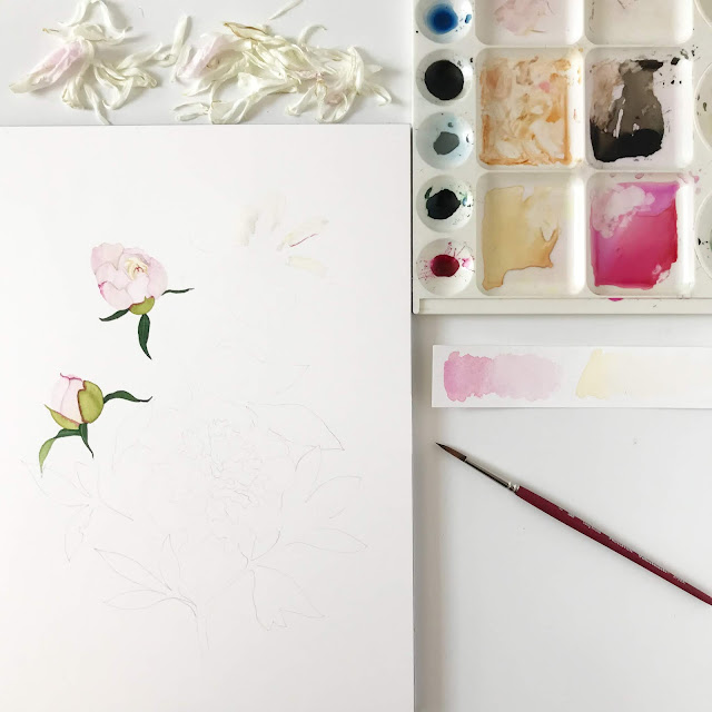 painting process, beginnings, watercolor, botanical watercolor, peonies, Anne Butera, My Giant Strawberry