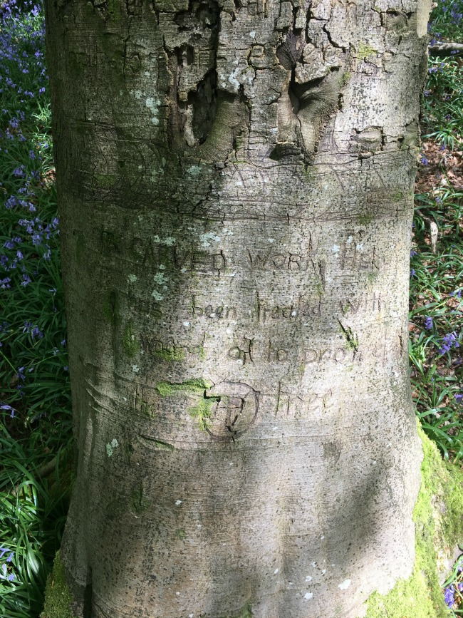 words-carved-into-a-tree-at-The-Wenallt-most-words-unreadable