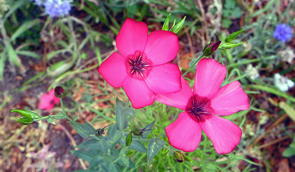 unknown pink and red flower