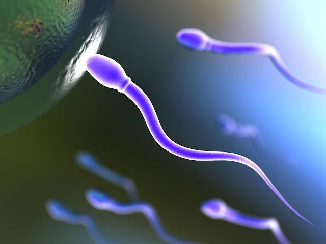 8 comidas fabulosas para aumentar sua contagem de espermatozoides (e aumentar suas chances de engravidar!)