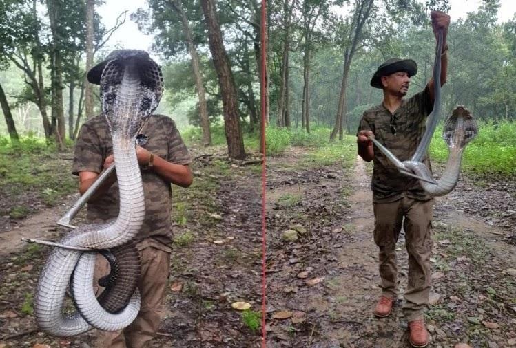 देहरादून में मिला विशालकाय कोबरा