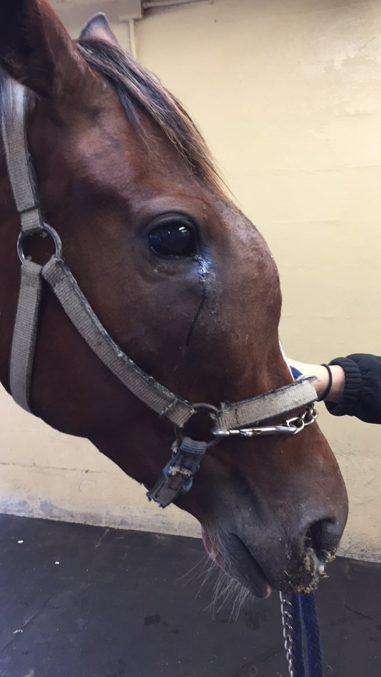 Sorry, equine facial swelling