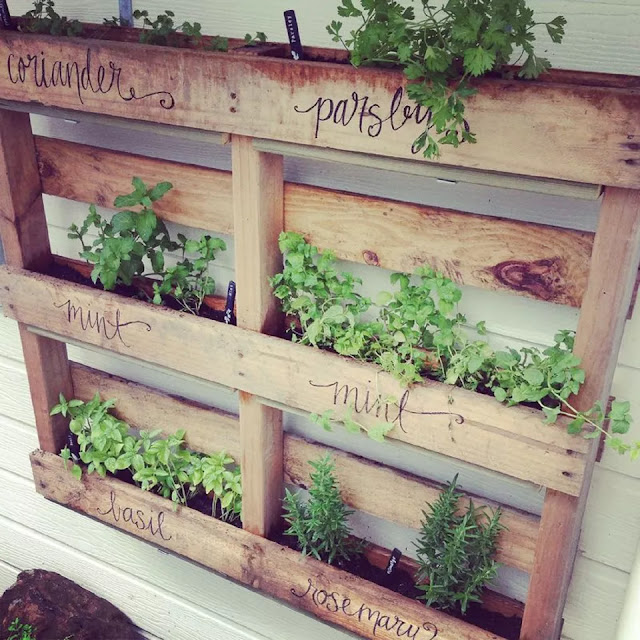 Pallet Herb Garden Wall