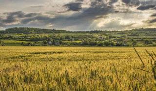 cropland ecosystem