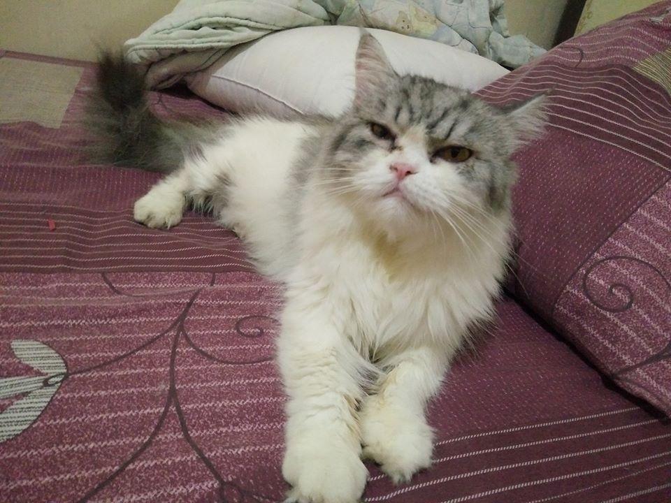 kucing flu
