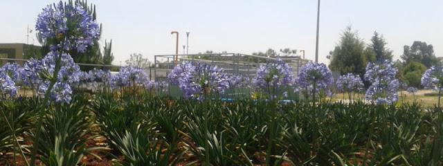 Hydropure: tratamiento de aguas con flores y bacterias