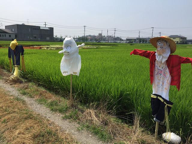 こしがや田んぼアート2015食戟のソーマ(8/2)