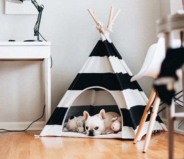 Cute Beds For Pets Combine With Interior Decoration Ideas 2