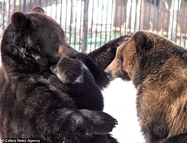Daddy bear and cub