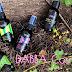 DABBA: Certified Organic Cosmetics