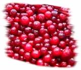 целебные свойства ягоды клюквы