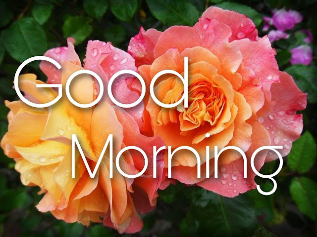 good morning messages with beautiful flowers