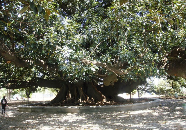La Recoleta, Buenos Aires, Argentina, Elisa N, Blog de Viajes, Lifestyle, Travel