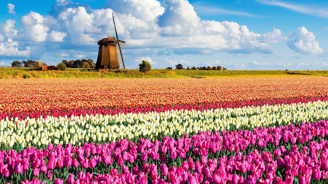Keukenhof-Park-Holland