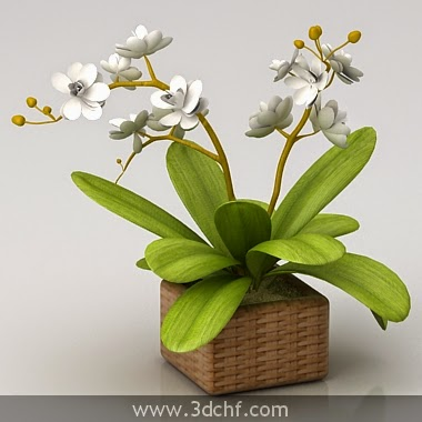 white orchid free 3d model