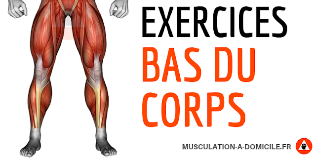 musculation à domicile exercices musculation bas du corps
