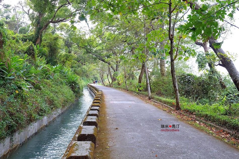水流東桐花步道