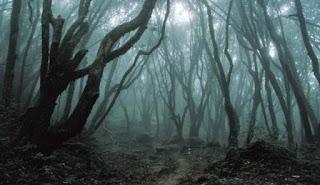 Hutan Aokigahara yang berhantu / catatanadi.com