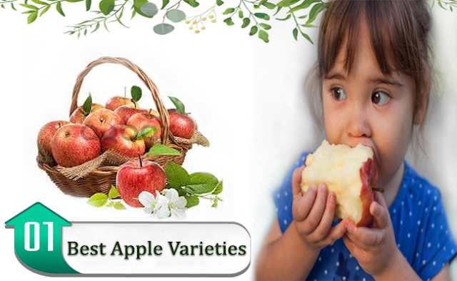 apple varieties, best apples in the world